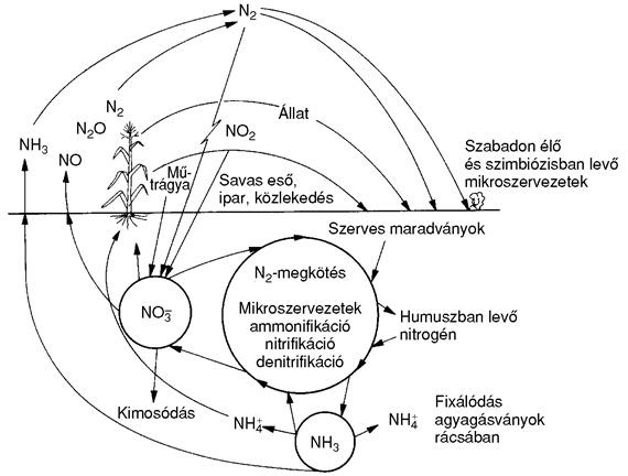 Nitrogen-korforgas-Fuleky-1999