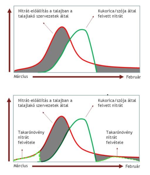 Takaronovenyek-nitrogen-hasznositasa